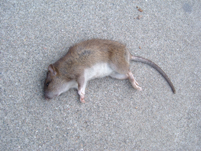 Dead Animal Removal in Baltimore City and Baltimore County